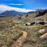Mule Deer NTSA Trail
